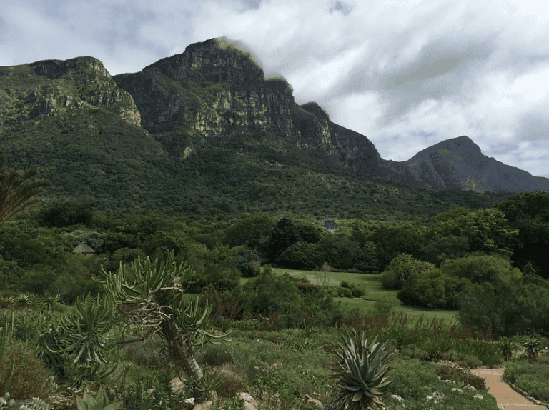 Kirstenbosch has a dense indigenous forest on its upper reaches