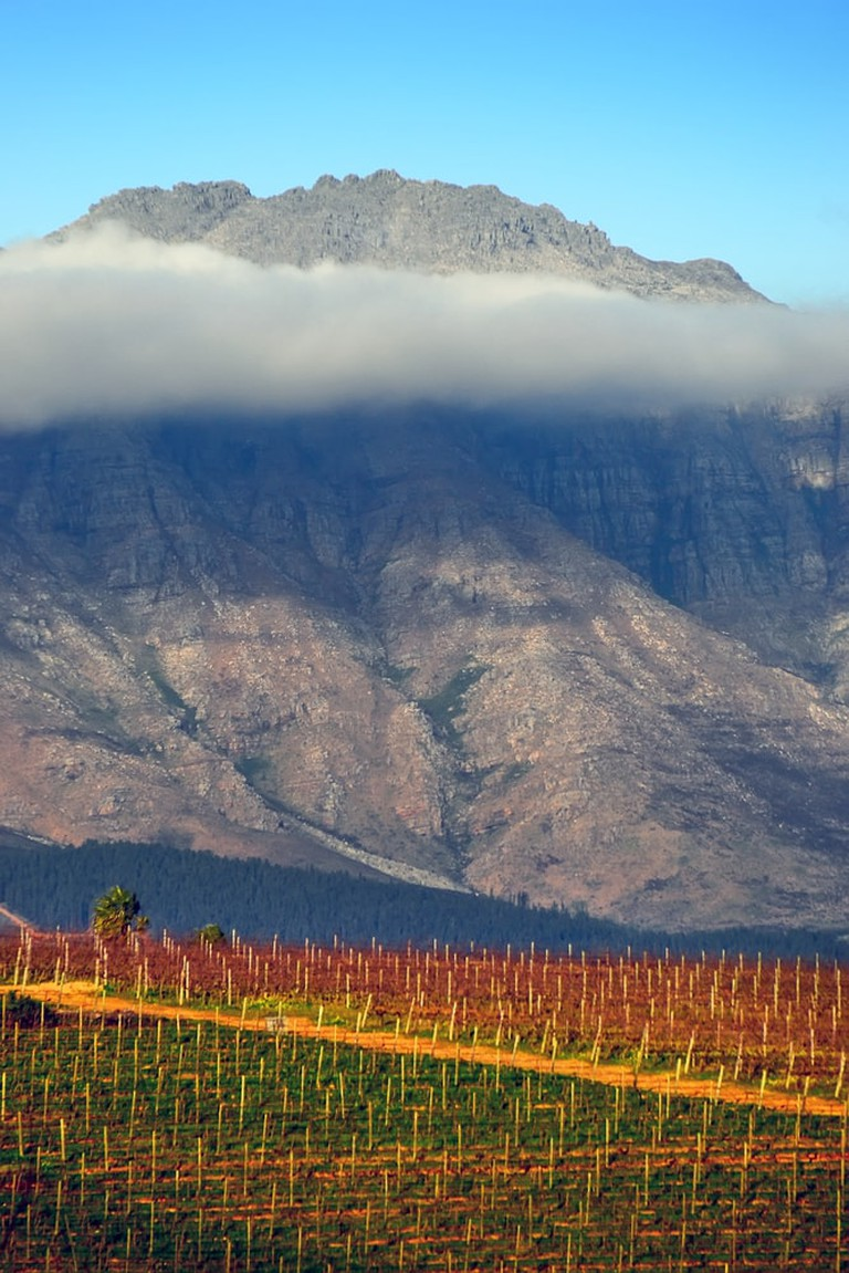 Vineyard in Stellenbosch, South Africa | © Vladislav Gajic/Shutterstock