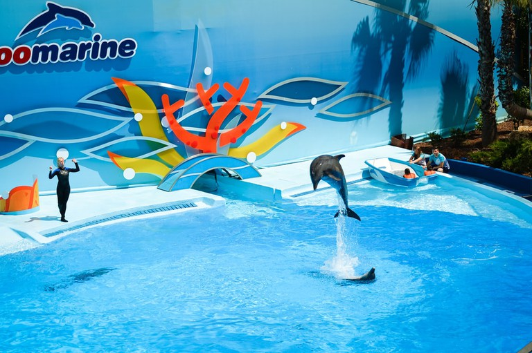 Dolphin show at Zoomarine | © ARIMAG/Shutterstock