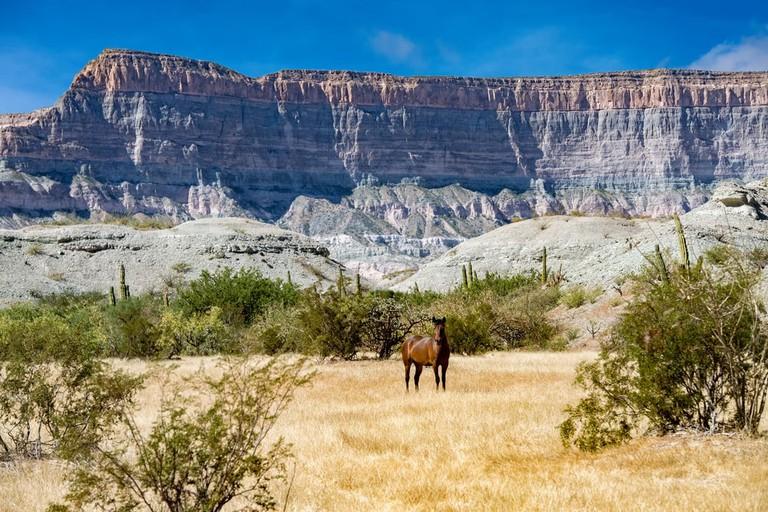 Wild Horse in the Baja California landscape