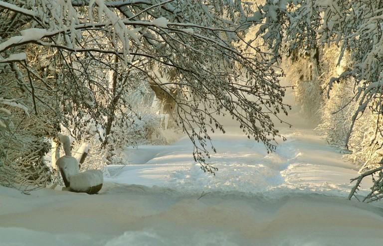 A hushed winter path / Photo courtesy of Pixabay