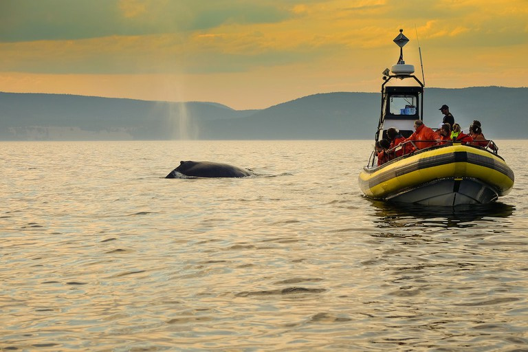 Whale watching in Tadoussac, Quebec