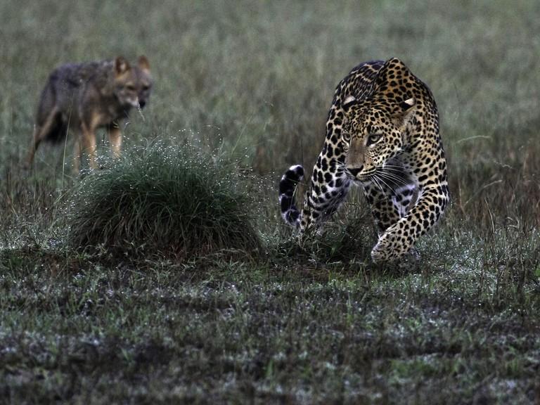 Leopard caught on camera in Wilpattu National Park
