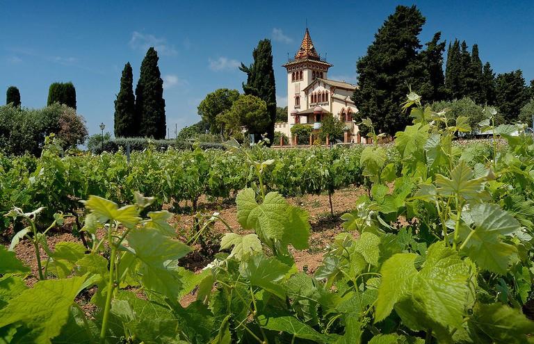 Penedès wine region, Spain