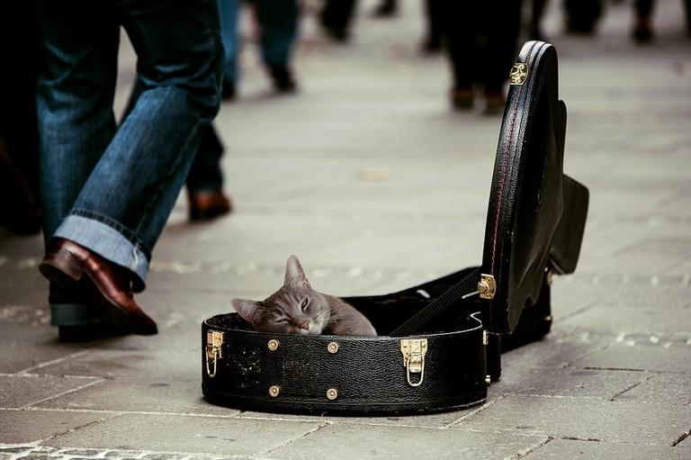 A cat taking a nap in an open guitar case