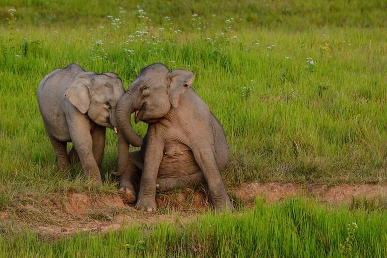 Elephants in Khao Yai national park