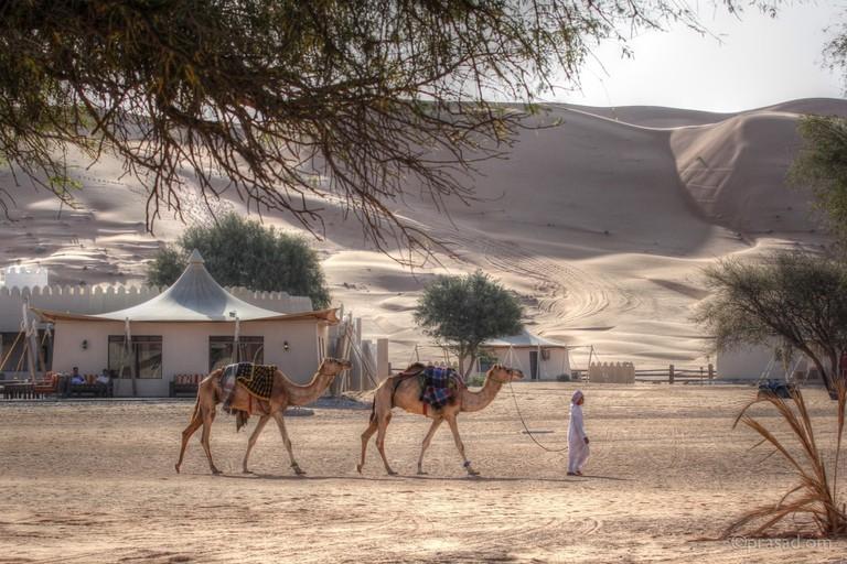 Desert Camp © Prasad Pillai