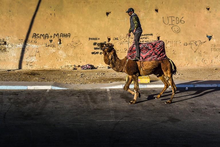 "<a href=""http://www.piviso.com"" target=""_blank"">Camel in Agadir"