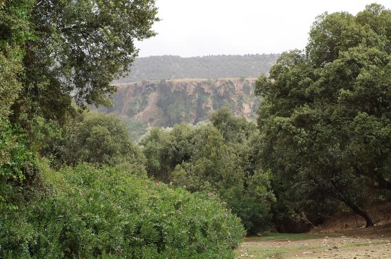 Greenery of Ifrane
