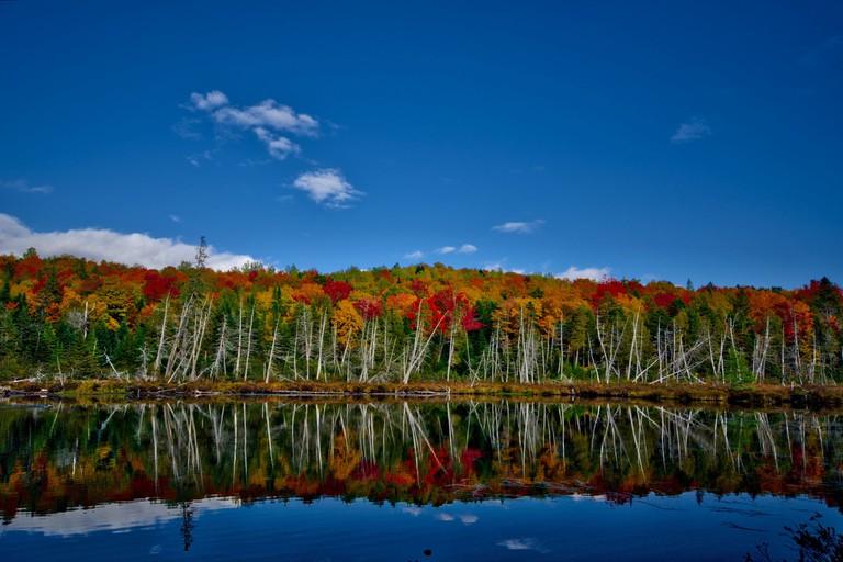 Fall foliage near Gulf Hagas