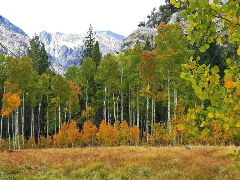 First Autumn Color, June Lake, Sierra Nevada 9-2017 Ι © Don Graham/Flickr