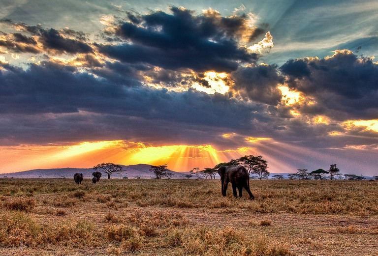 Wildlife of Tanzania, elephants