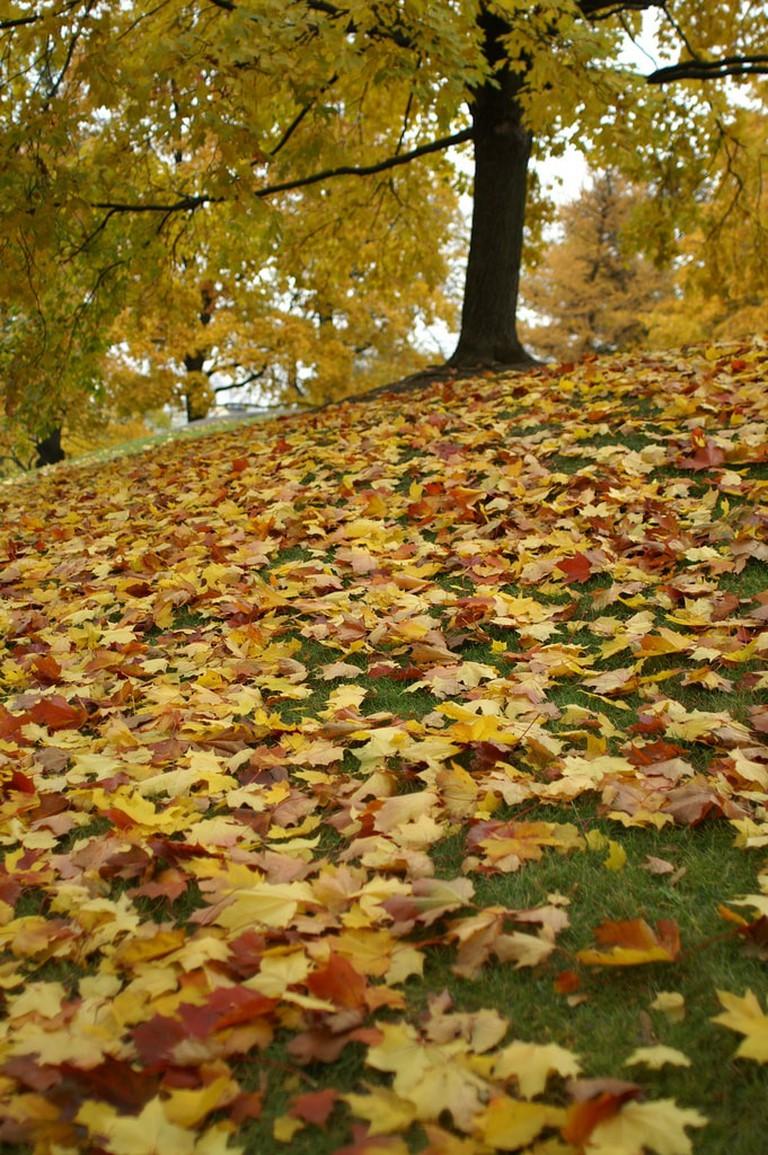 Kaisaniemi Park in autumn