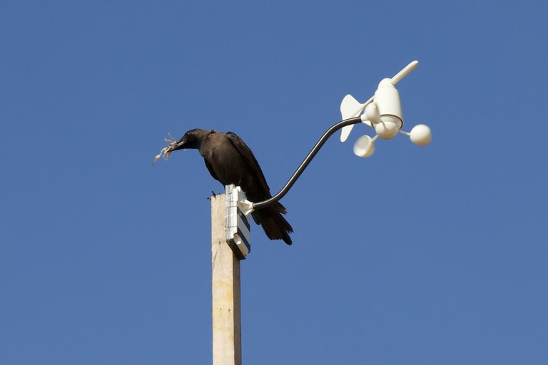 This crow is ready to swoop to his tree to upgrade his nest.