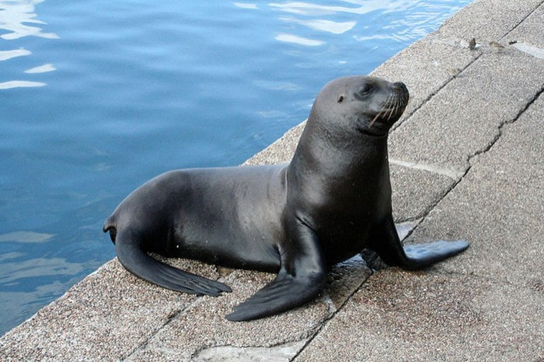 Sea lion at Punta del Este's port