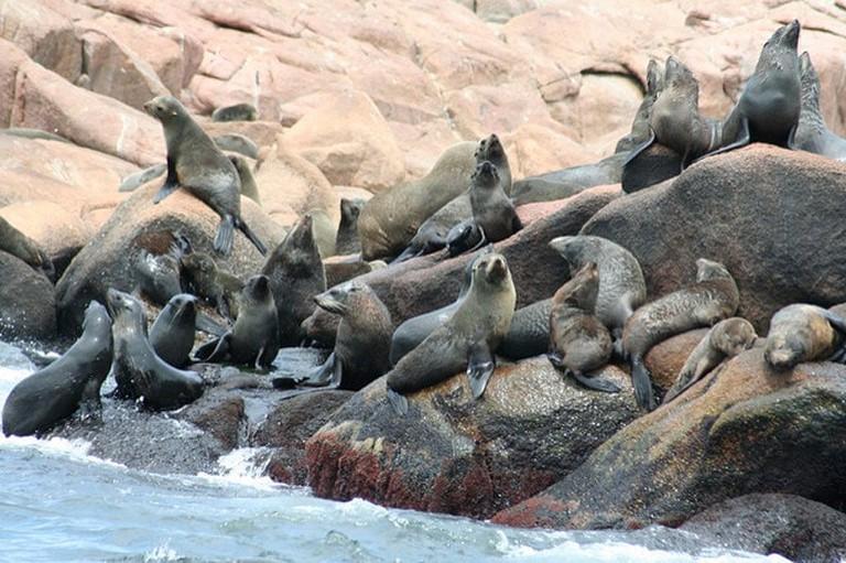 "Isla de Lobos (""Sea Lion Island""), Punta del Este"
