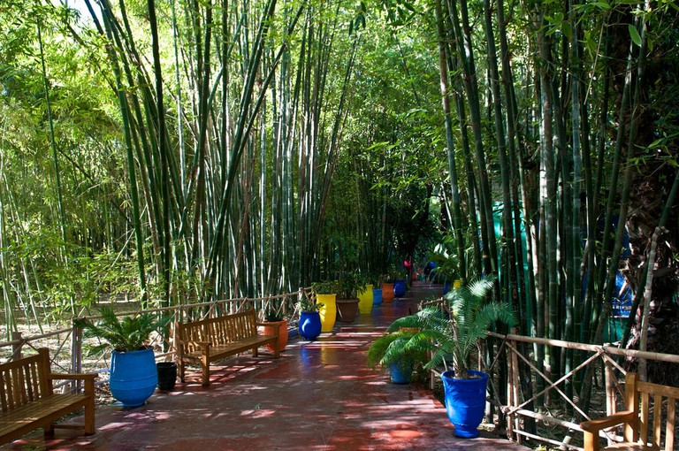 Lush greenery at the Majorelle Gardens
