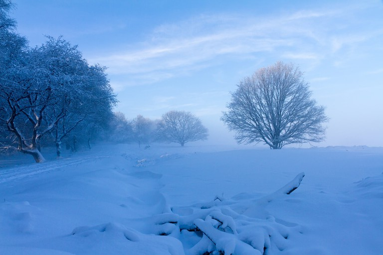 Another shot of de Veluwe after snowfall