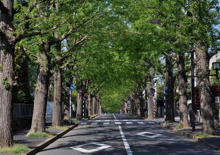 Street in Denenchofu, Tokyo