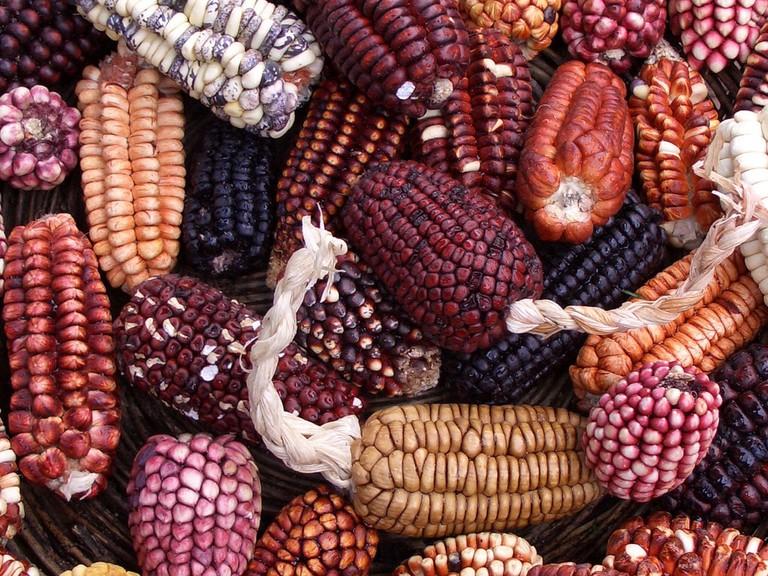 Corn Varieties │