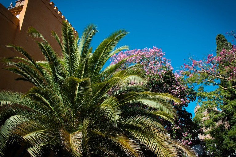 Palm trees and blossom in Seville's city centre
