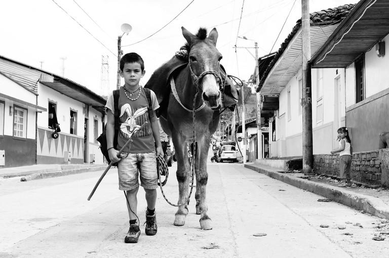 Horse in Salento