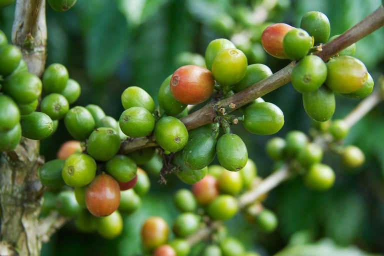 Learn about Colombian coffee in Salento