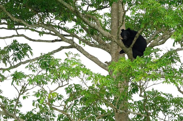 Bear in Khao Yai national park