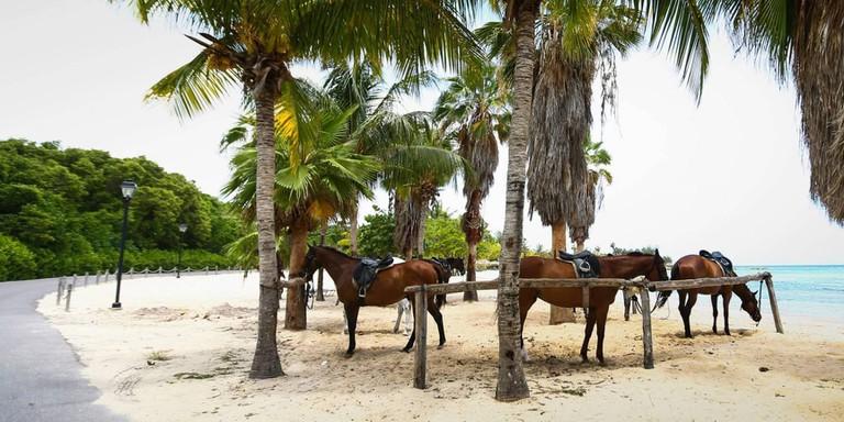 activity_horseriding10