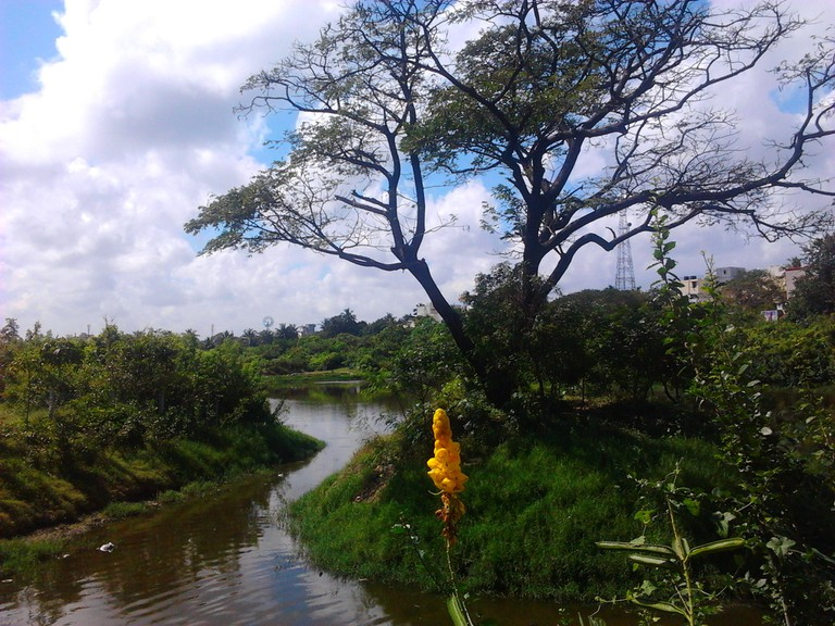 Adyar_Poonga's_waterbody_as_seen_from_Karpagam_Bridge,_MRC_Nagar6