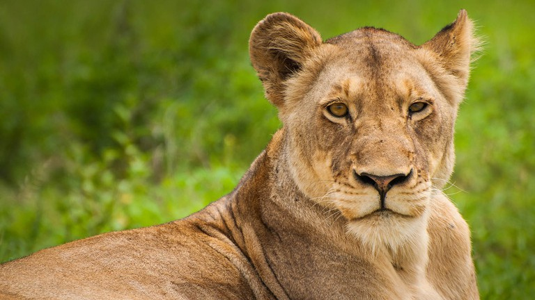 An introvert's guide to Johannesburg_Lion Park