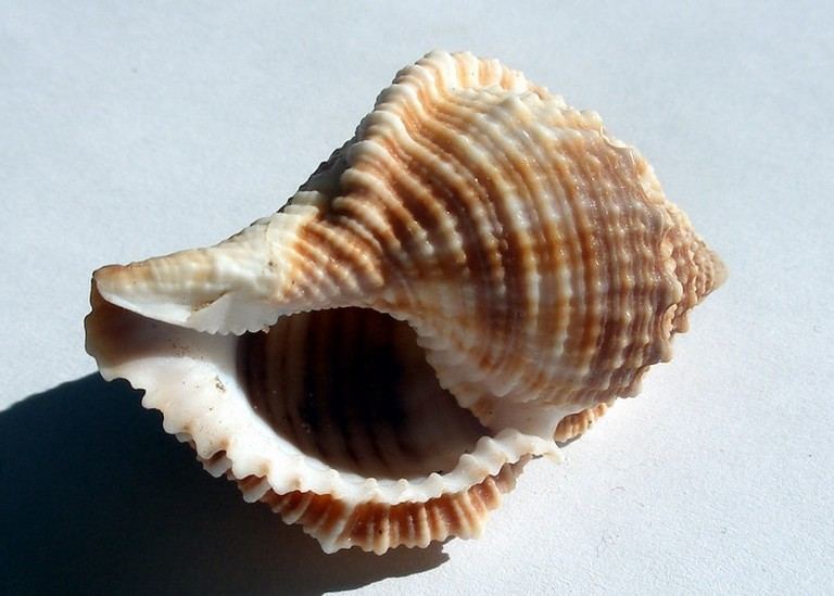 A shell… or is it?