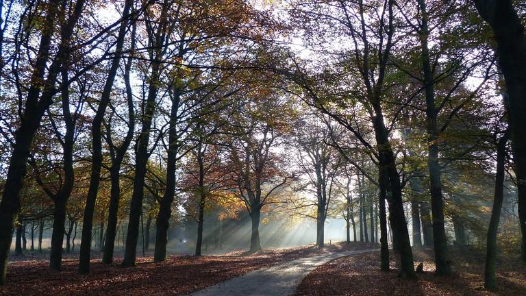 The Hoge Veluwe National Park