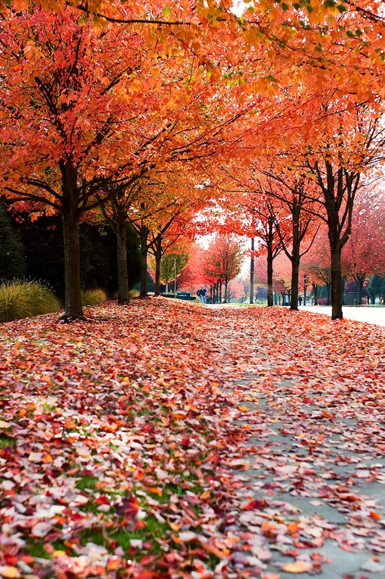 Autumn in Seattle   © Bala Sivakumar / Flickr