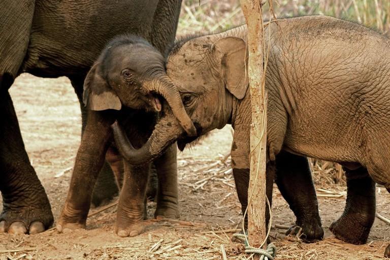 Baby Elephants, Laos | © Fabien Batside/WikiCommons