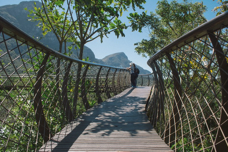 The side railings of the Boomslang walkway resemble the skeleton of the famous snake found throughout South Africa