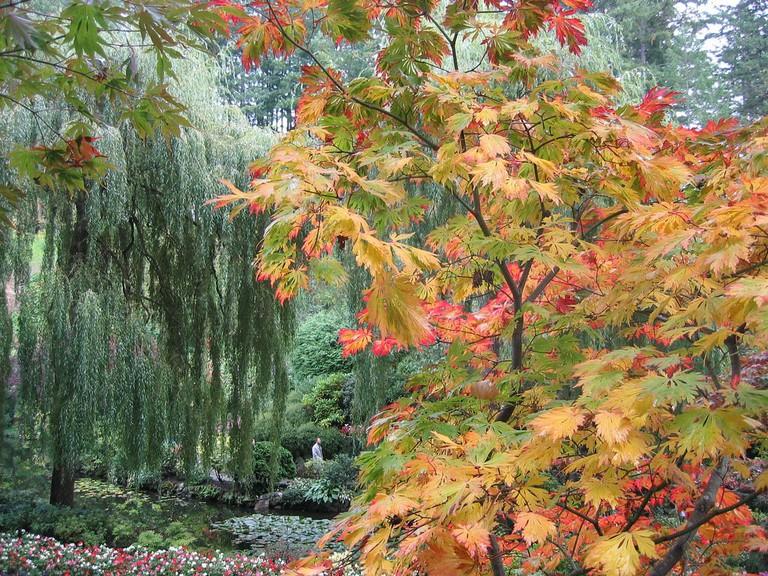 Butchart Gardens | © tiarescott / Flickr