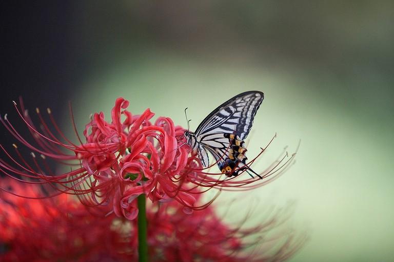 butterfly-1140062_960_720