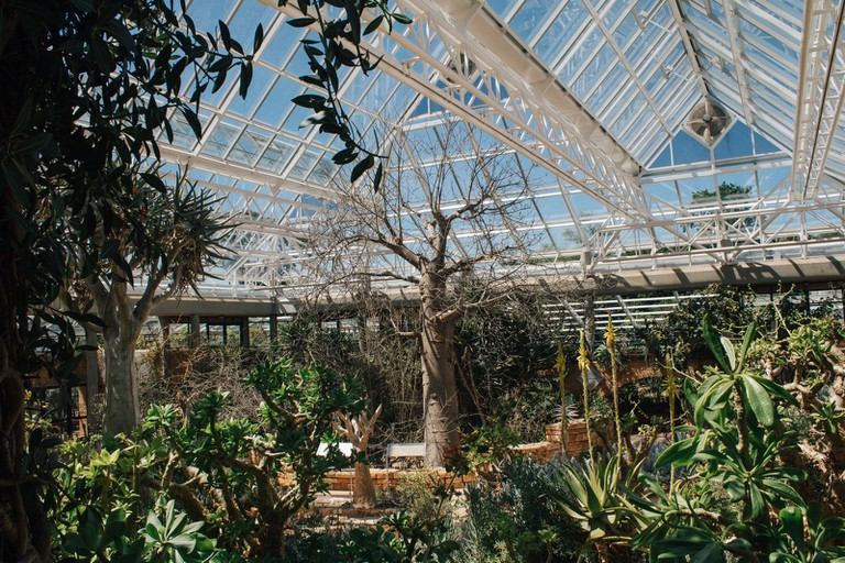 The conservatory is home to several species usually only found in arid and semi-arid regions of southern Africa