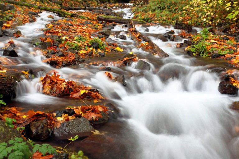 Creek Near Columbia River Gorge   © Ian Sane / Flickr