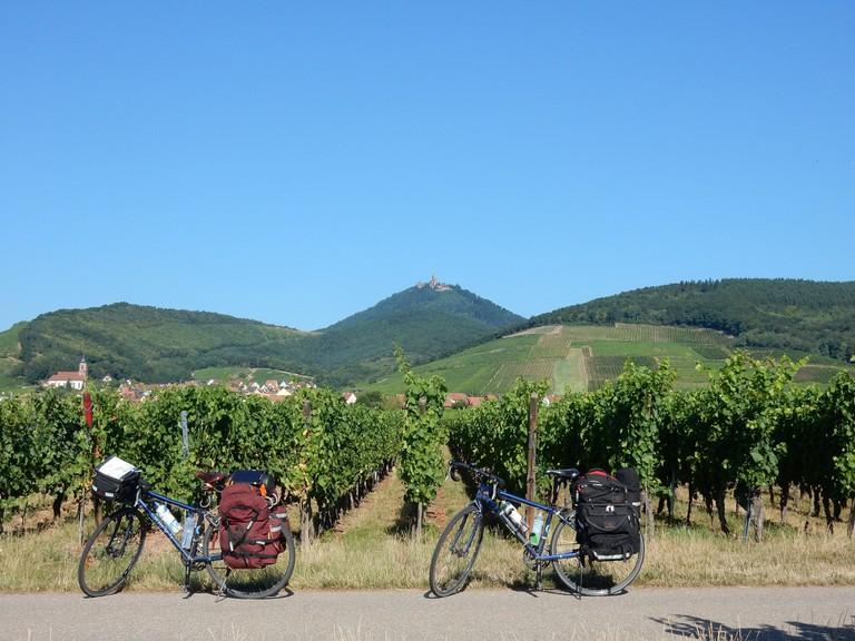 Cycling across vineyards