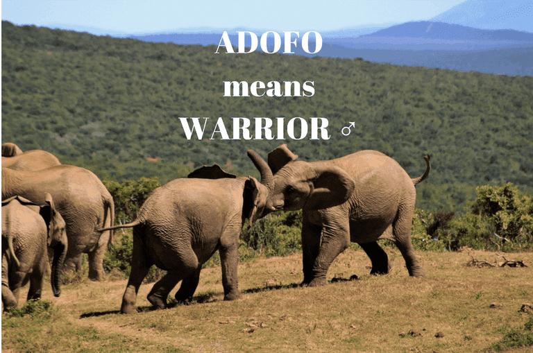 Elephant fight