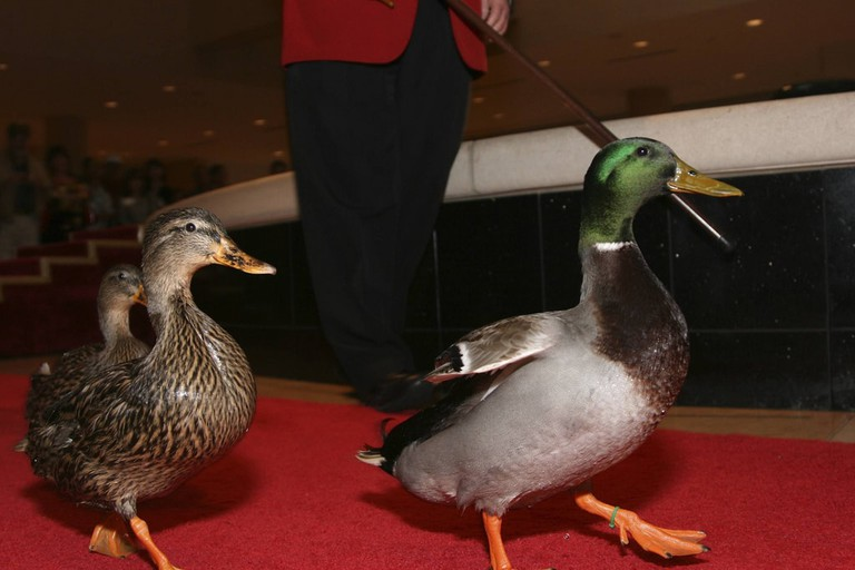 Peabody Ducks at the Duck March