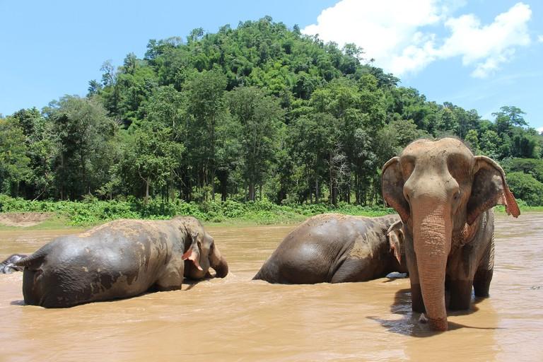 elephant-2647010_1920