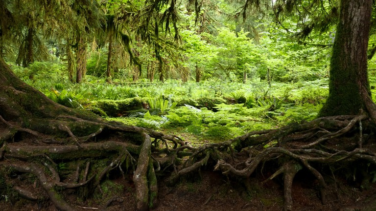Hoh Rainforest | © Aryeh Alex