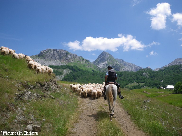Horse Riding in Montenegro | Courtesy of Mountain Riders