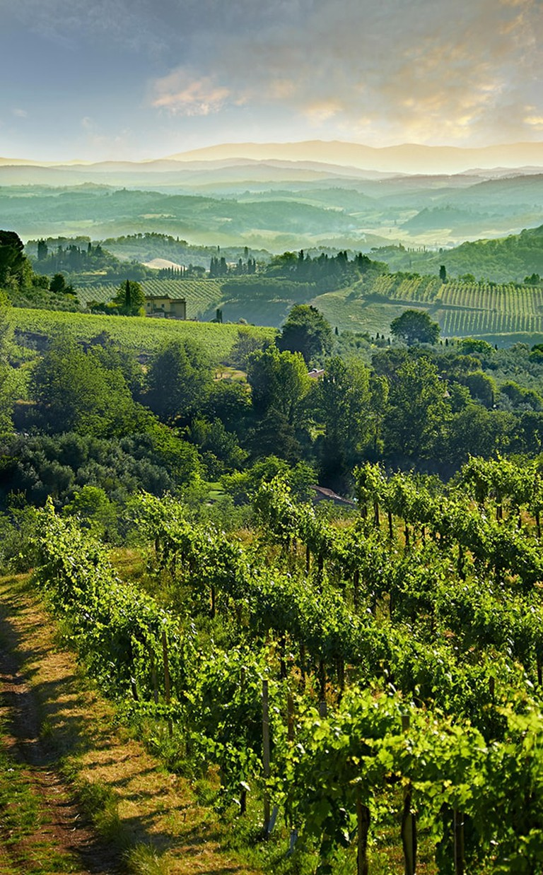 The vineyard covered hills of the Chianti wine region of Tuscany