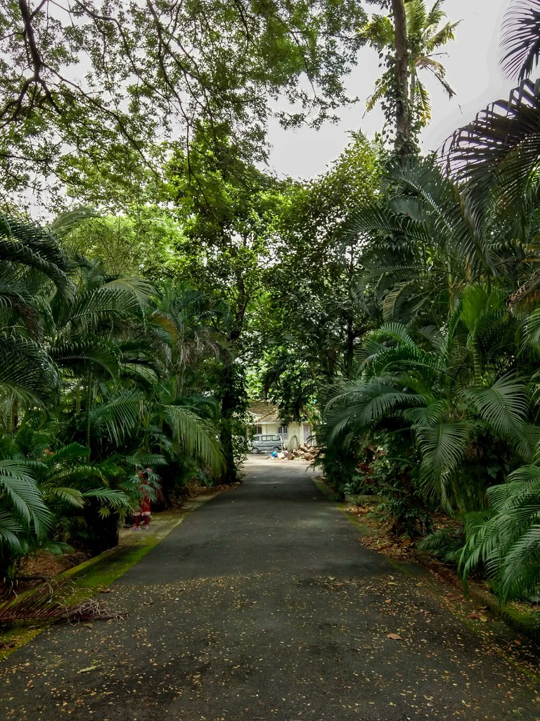 Kochi is a town of quaint lanes fringed with trees