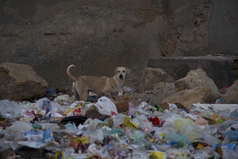 Karachi Wildlife | © Syed Umer Hasan