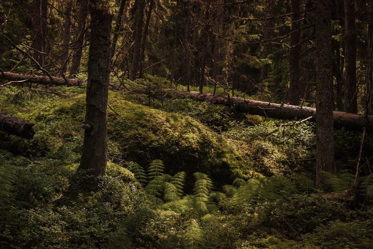 In the woods at the isle of Iniö